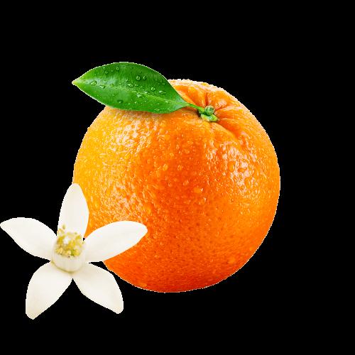 Orange & Avocado oil